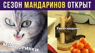 Приколы. СЕЗОН МАНДАРИНОВ ОТКРЫТ   Мемозг #151