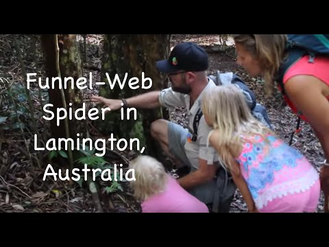 Oldest Funnel-Web Spider in Lamington National Park, Australia