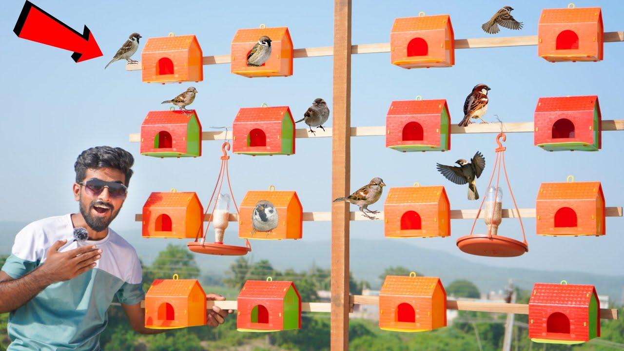 We Made A Colony For Birds   हमने बनाई पक्षिओ को लिए एक कॉलोनी - 5-Star Colony
