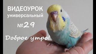 """🎧 Учим попугая говорить. Урок № 29: """"Доброе утро!"""""""