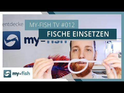 Fische richtig einsetzen - darauf solltest du achten | my-fish TV