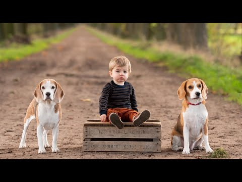 Cute Toddler Taking care of his dogs : Funny Beagles Louie & Marie