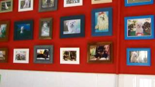 Peluqueria Clan Ferona - Bichon Maltes, Yorkshire Terrier, Westie