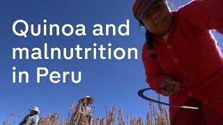 how cook quinoa