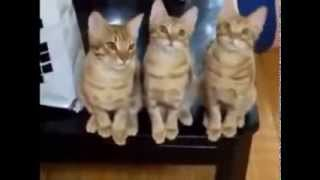 Кошки 2. cool and funny cats
