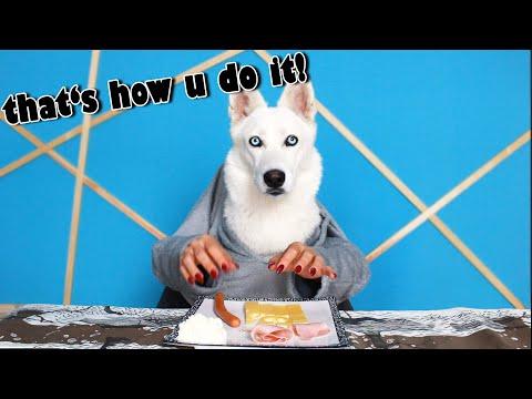Fun ways to Feed a Dog during Quarantine