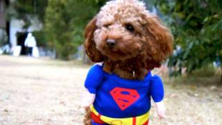 SupermanDog SORA