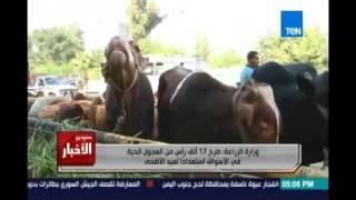 وزارة الزراعة :طرح 17 ألف رأس من العجول الحية في الأسواق إستعدادا لعيد الأضحي