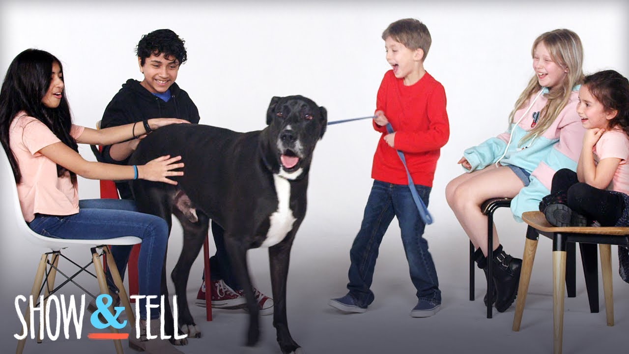 Show & Tell Pets | Show And Tell | HiHo Kids