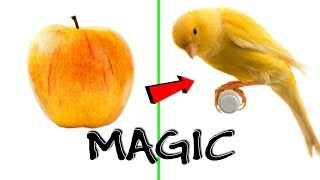 Top 13 Magic Tricks And More That You Unbelievable | NEW Best Magic Vines Compilation
