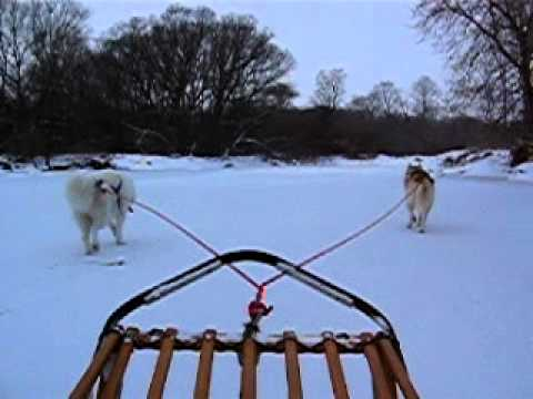 Inuit Sled Dogs Pulling a Sled on River Ice - YouTube