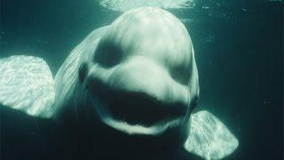10 STRANGE Deep Sea Photos Explained