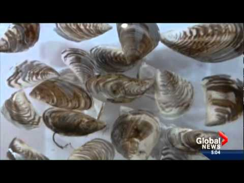Global Okanagan - Nov. 26, 2014 - Invasive Species