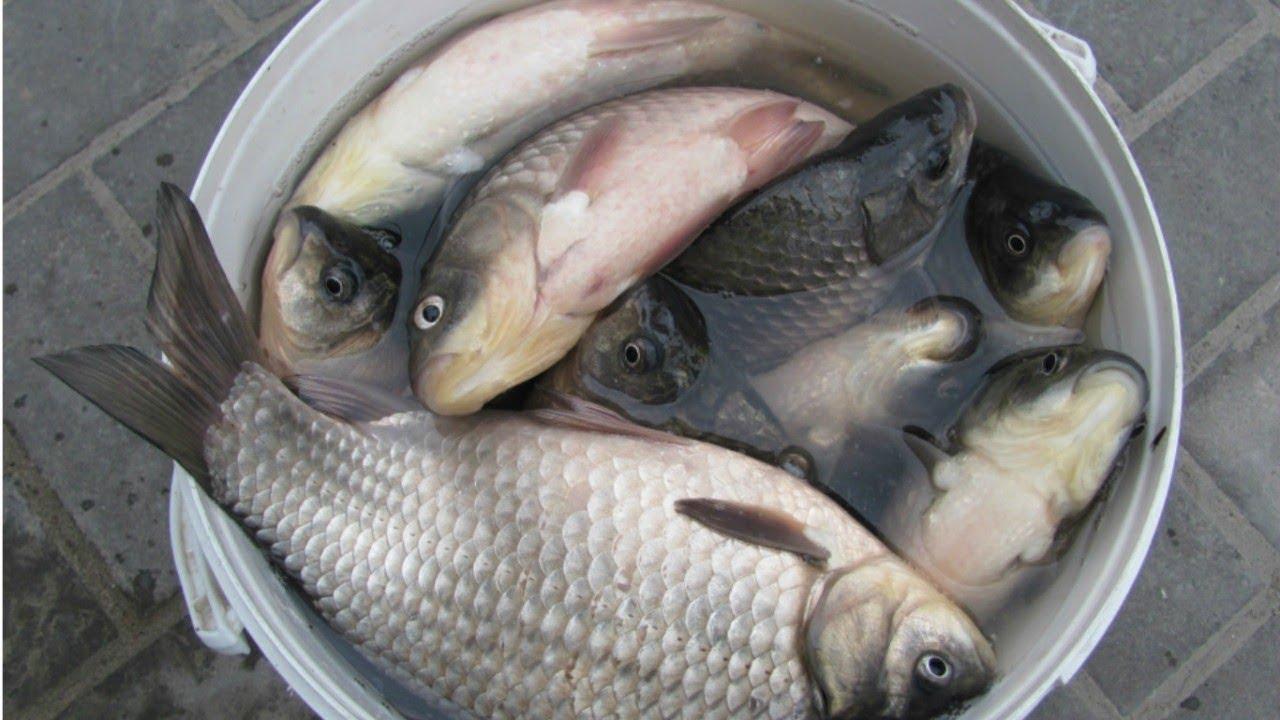 Более 73 лет эта рыболовная насадка лидирует по карасю -ЖИДКОЕ ТЕСТО--Забытые секреты на карася.