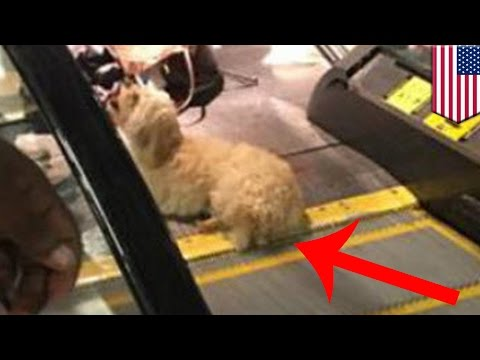 Thumbnail: Dog stuck in escalator: Terrier rescued after back paw gets stuck in airport escalator - TomoNews