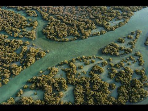 Qurum Nature Reserve | 4K UltraHD | محمية القرم الطبيعية