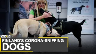 Finland Deploys Coronavirus-sniffing Dogs At Airport | Sniffer Dogs Can Detect Virus In 10 Sec