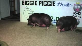 Biggie Piggie Vs Blue Bell Banana Pudding Ice Cream V2.0.com