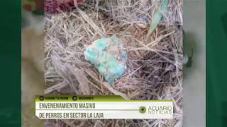 Envenenamiento masivo de perros en sector La Laja