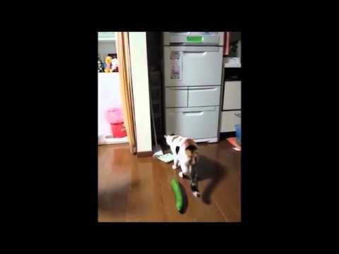 Koty Vs Ogórki Youtube