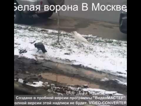 белая ворона в Москве!!!.avi