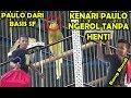 Lomba Kicau Burung Kenari Aksi Kenari Paulo Ngerol Nembak Panjang Eps  Milik Bg Bandi Nst  Mp3 - Mp4 Download