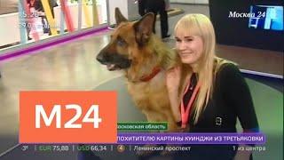 Смотреть видео Чем удивит крупнейшая телекоммуникационная выставка - Москва 24 онлайн