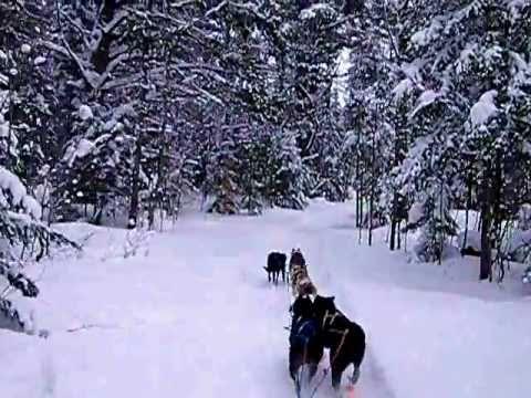 Dog Sledding to Winter Camp - YouTube