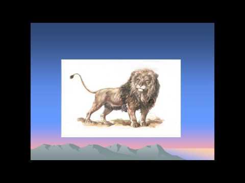 презентация к рассказу толстого лев и собачка