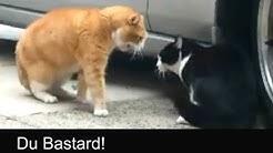 Sprechende Katzen / Talking Cats (Official german subtitles)