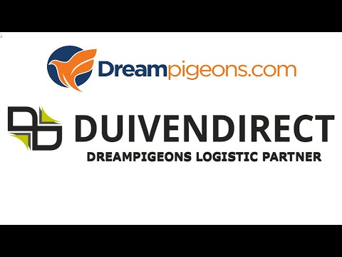 Duivendirect - Dreampigeons Video