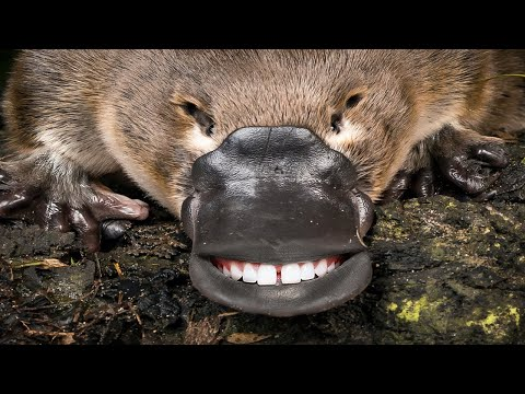10 Deadliest Animals On Earth That Look Completely Harmless