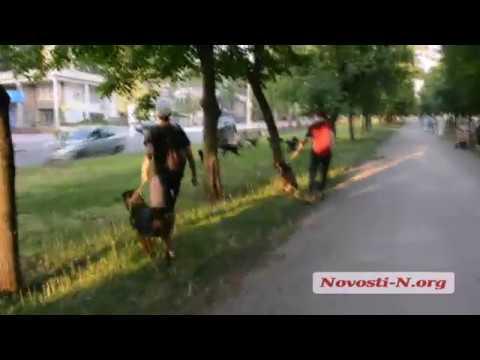 Видео 'Новости-N': Собаки на проспекте в Николаеве