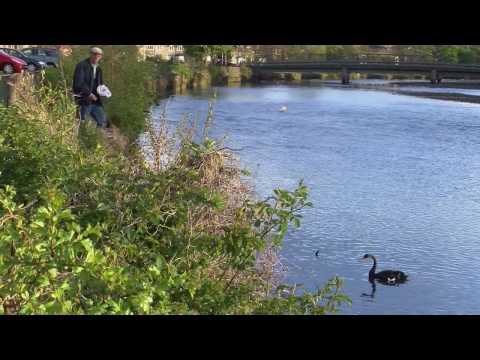 BLACK SWAN MUSSELBURGH