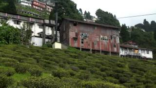 Darjeeling's Happy Valley Tea Plantation