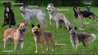 Собаки Тома, Лаванда, Дженна, Тринити и Тим из Лесного приюта ждут  хозяев.