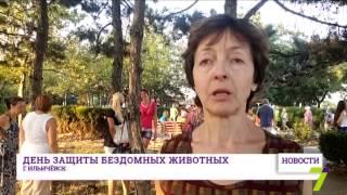 Жители Ильичёвска за европейский метод решения проблемы бродячих животных(, 2015-08-17T18:47:35.000Z)