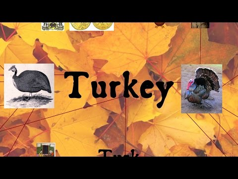Turkey: Thanksgiving and Global Food Systems