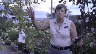 Plant a Fruit Tree This Fall