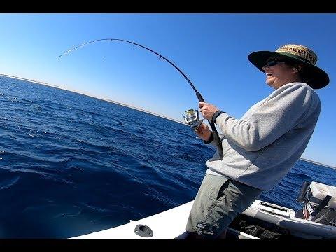 Gnaraloo Fishing Pt 1, Cobia On Light Tackle