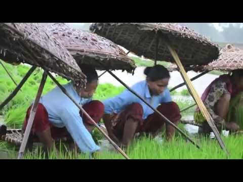Got Rice? Subsistence Rice farming in Rural Nepal