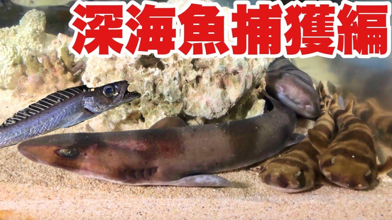 安くて美味しい深海魚が砂浜で簡単に拾える??採集後は標本作りに挑戦!! 【そらり家訪問第2段】