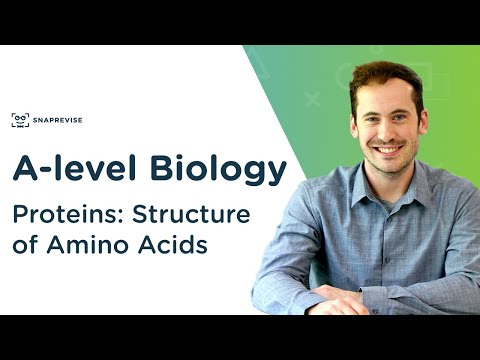 Proteins: Structure of Amino Acids   A-level Biology   OCR, AQA, Edexcel