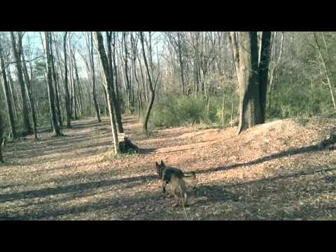 Dog Tracking Classes in Northern Virginia! K9 Tracking! Search and Rescue Training Northern Virginia
