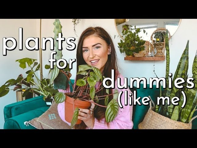 easy-plants-you-won-t-kill-because-even-i-didn-t-sarah-belle