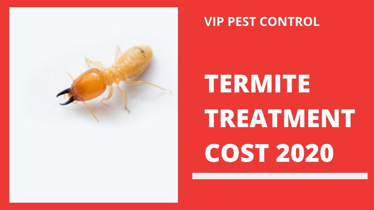 How Much Does Termite Treatment Cost In Melbourne 2020