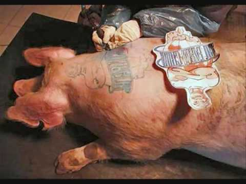 Your Pig Needs A Tattoo