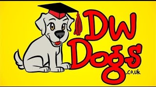 Dog Training Hastings | 07920 875 887 | Dw Dogs East Sussex