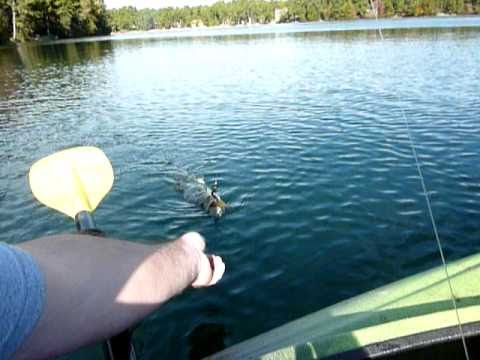 bass fishing in myles standish from my  kayak
