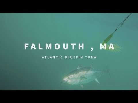 New England Fishing // Falmouth, MA // Episode 102